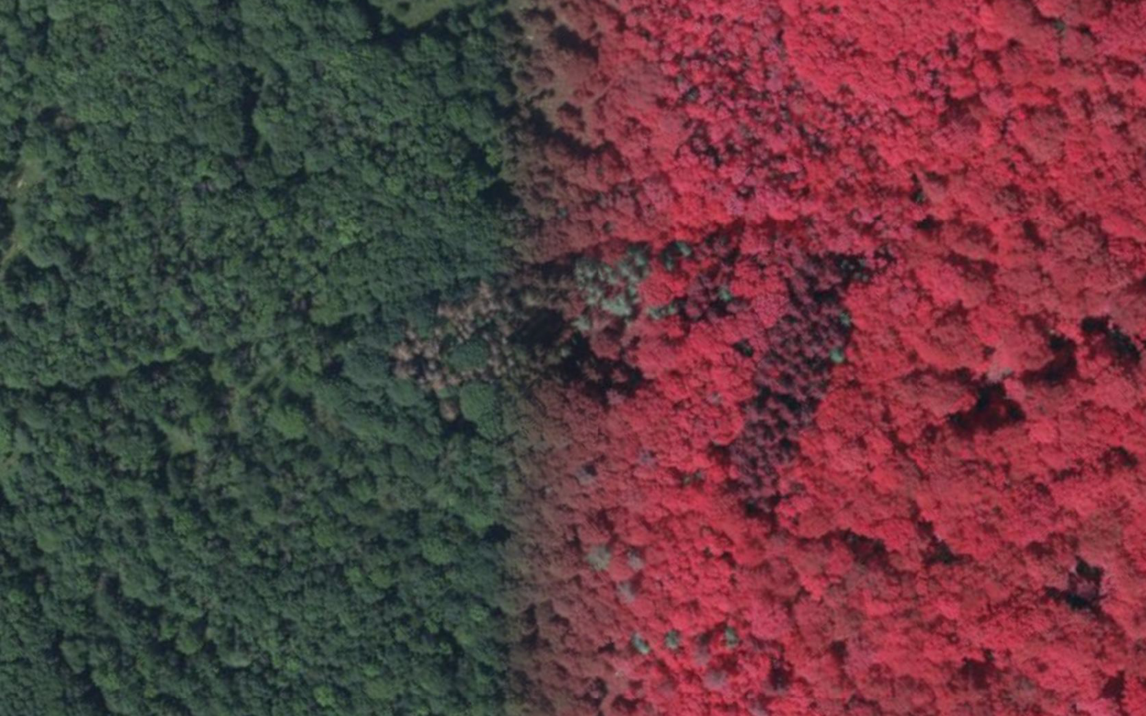 Excerpt from the aerial photography of the Hainich National Park: Comparison of infrared and RGB images. Dead trees stand out clearly in both images.